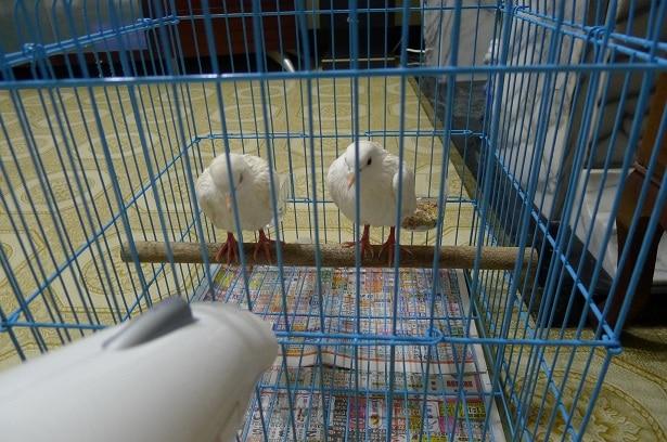 班鳩洗澡吹乾