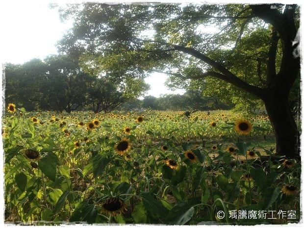 萬博紀念公園 009